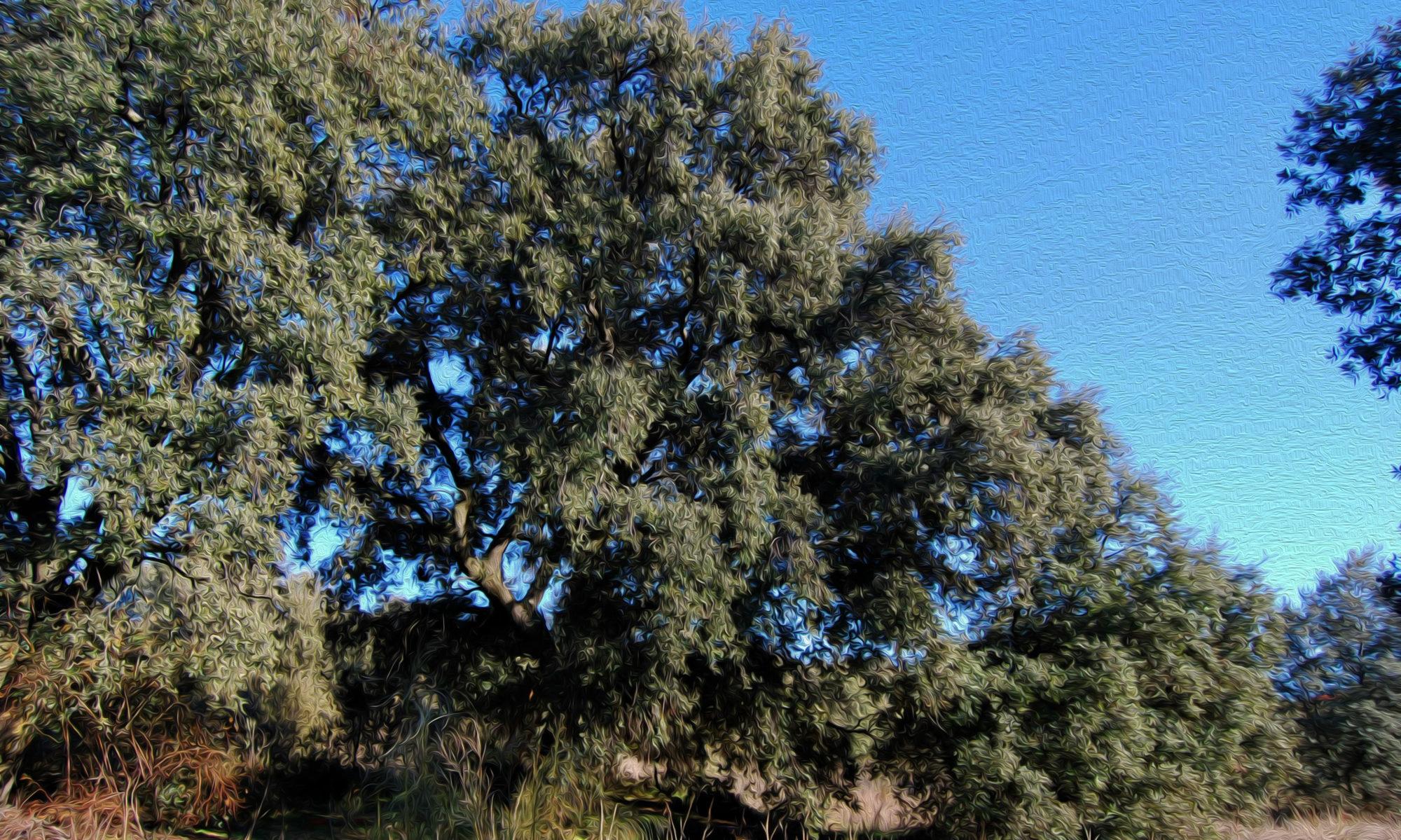 Asociación para la Conservación del Patrimonio Natural y Cultural